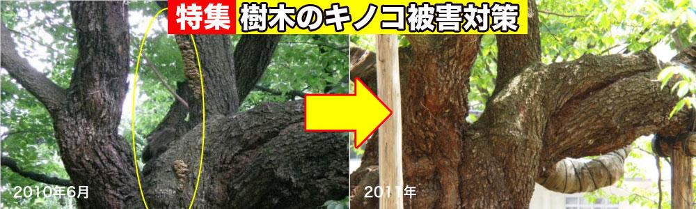 樹木のキノコ被害対策特集